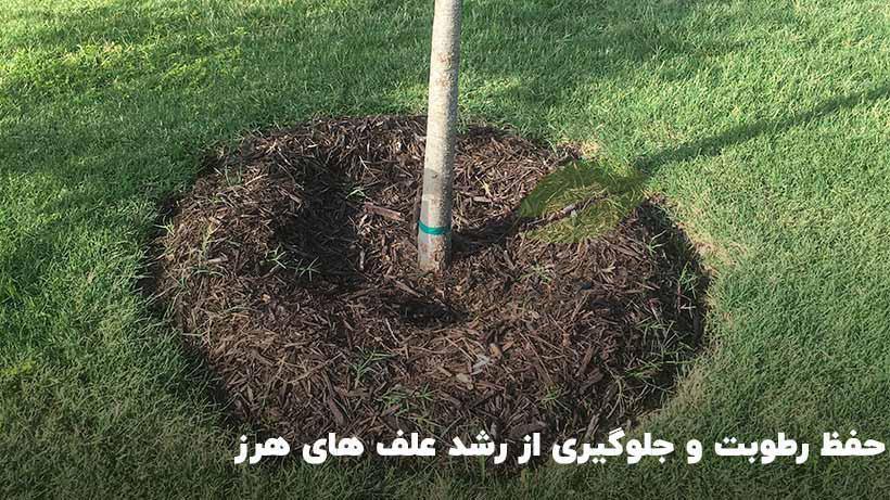استفادخ از مالچ تازه جهت حفظ و مراقبت از ریشه