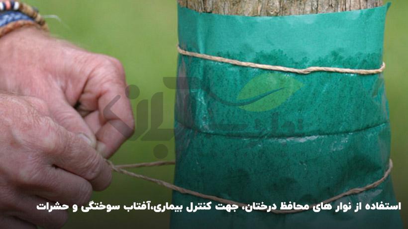 بستن تنه درختان و حفاظت در برابر حشرات، و نور خورشید