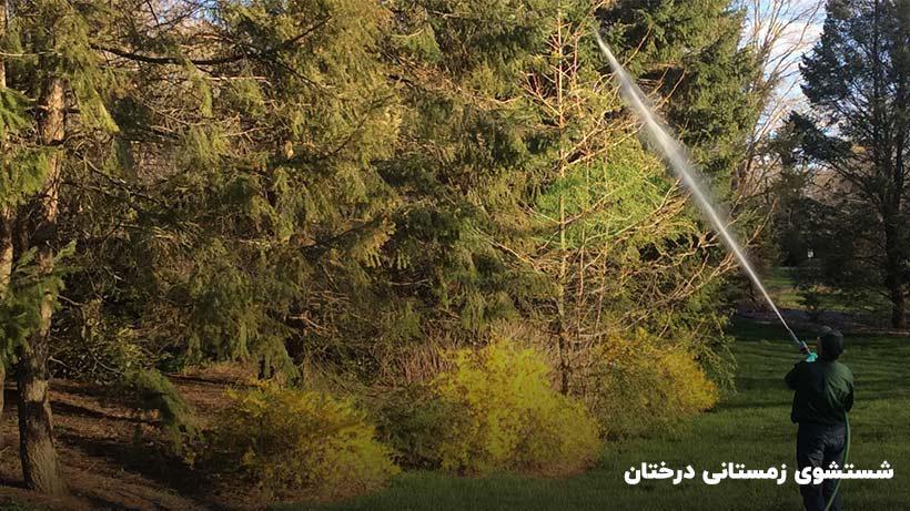شتشوی درختان در زمستان