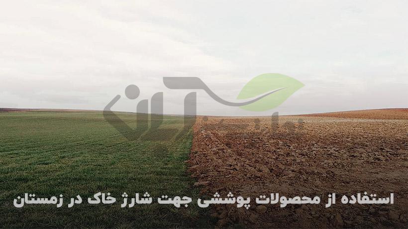 گیاهان پوششی جهت تقویت زمین قبل کشت اصلی
