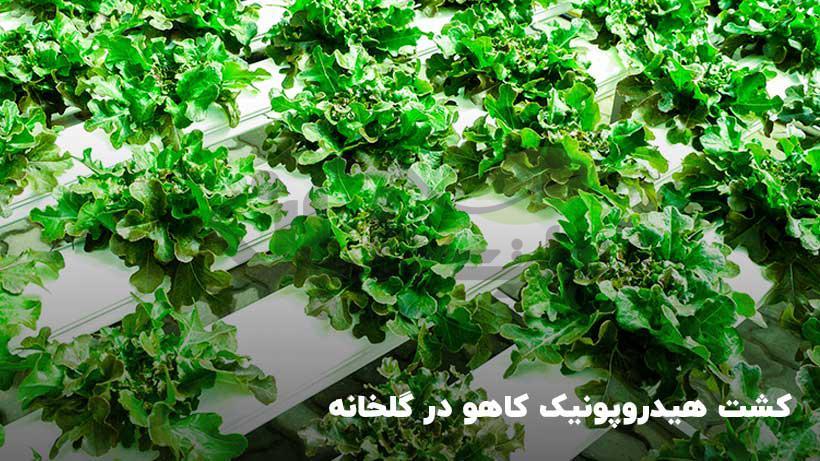کشت محصولات هیدروپونیک گلخانه