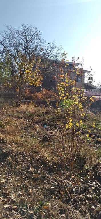 عدم رعایت بهداشت باغ و درخت