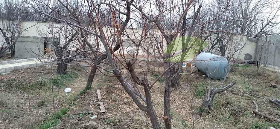 درخت میوه در زمستان