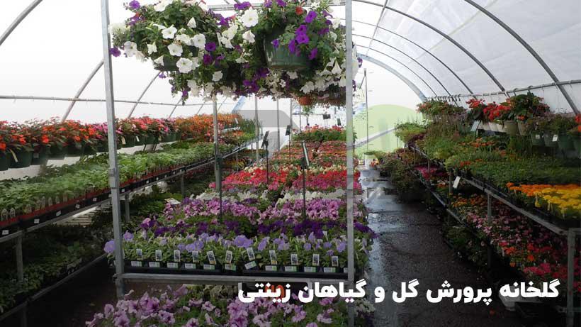 پرورش گل و گیاه گلخانهای
