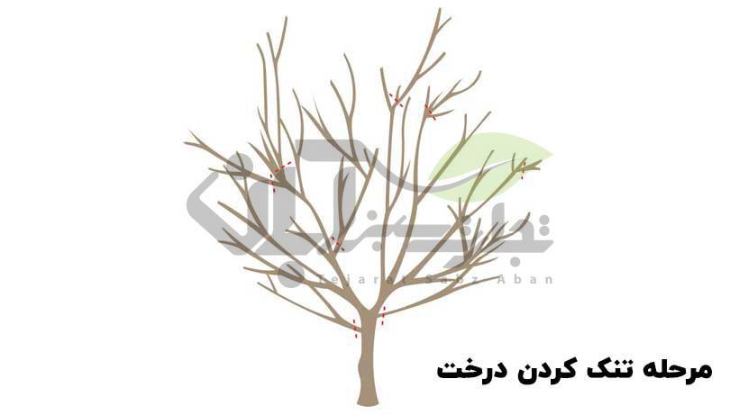 تنک کردن درخت