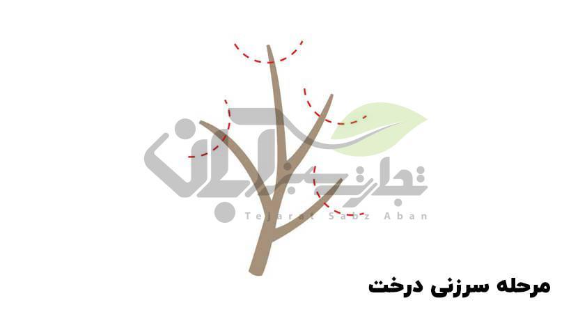 سرزنی درخت