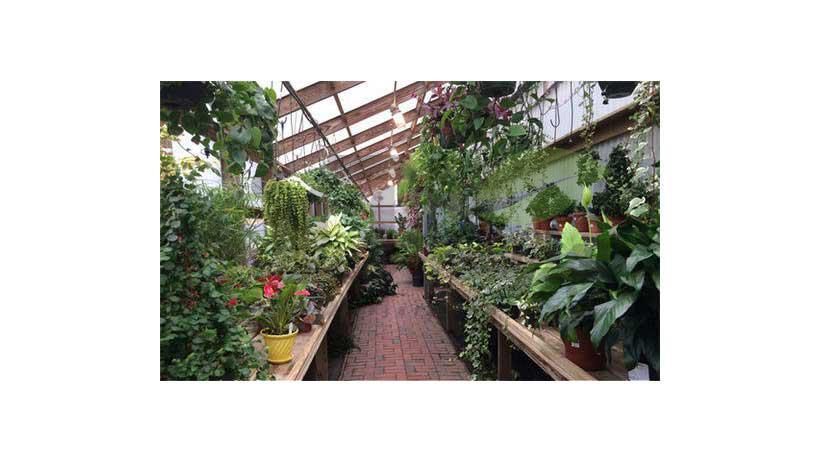 گلخانه گل و گیاه