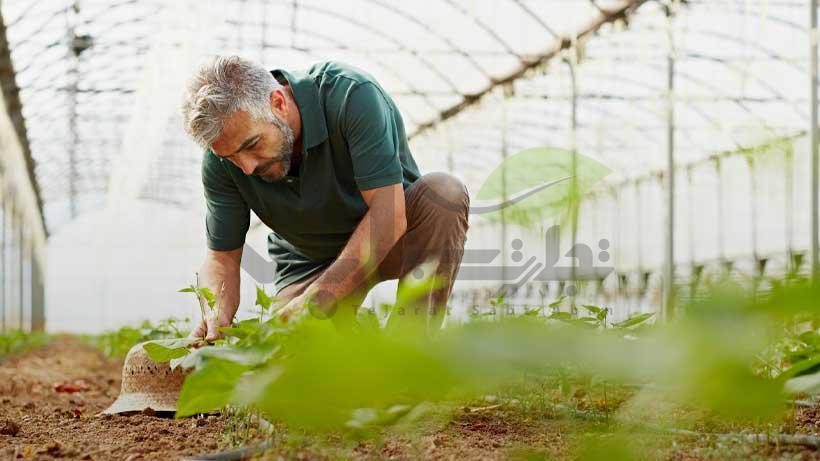 کارشناس گلخانه و باغبانی