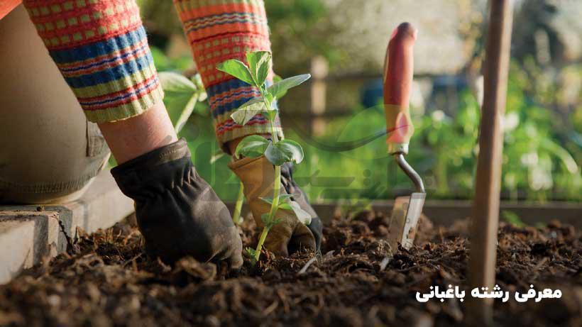 معرفی رشته باغبانی