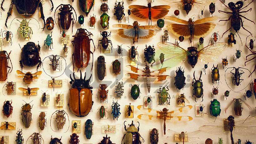 شناسایی حشرات و نام آنها