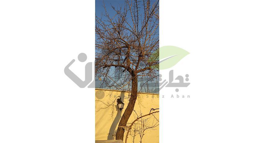 هرس نامناسب درخت