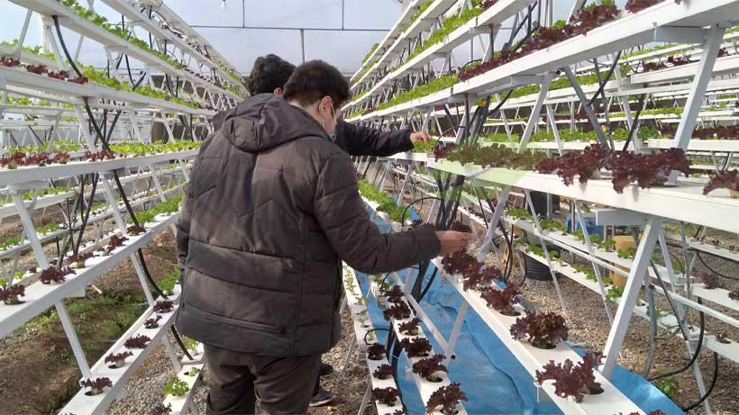بازدید از گلخانه ان اف تی کاهو فرانسه