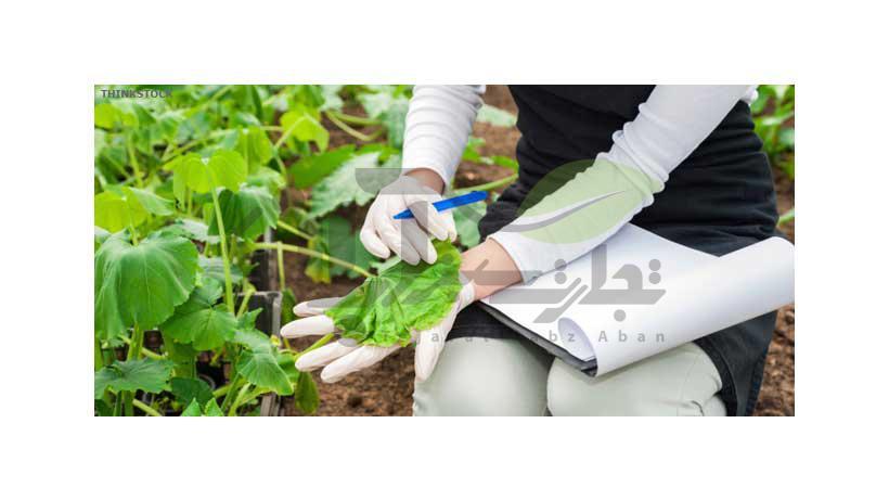 بررسی برگ گیاه توسط گیاه پزشک