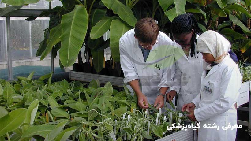 معرفی رشته گیاه پزشکی