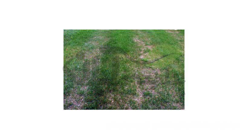 فشردگی خاک بر اثر وزن چمن زن
