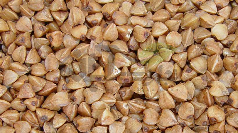 دانه گندم سیاه