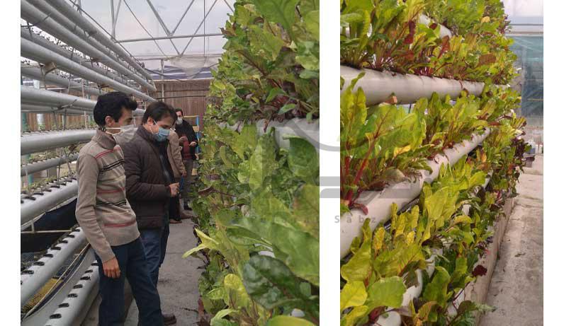 کشت سبزیجات در گلخانه اکواپونیک